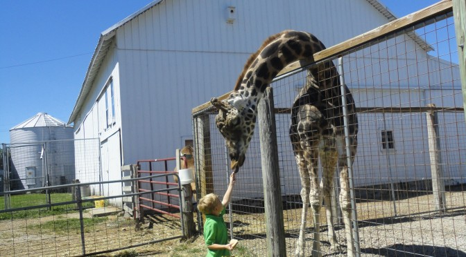 Wordless Wednesday #12 – Feeding the giraffe