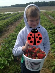 All of the strawberries