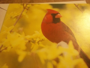 I absolutely love cardinals.