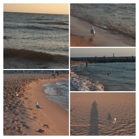 IMG_3414-COLLAGE
