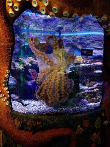 octopus #2.jpg