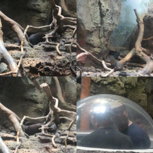 otters.jpg