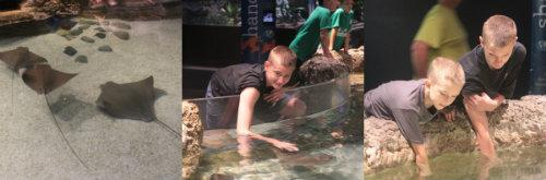 petting the manta rays.jpg