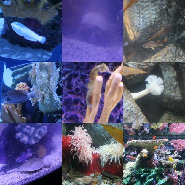 random fish.jpg