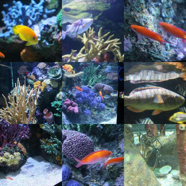 random fish #2.jpg