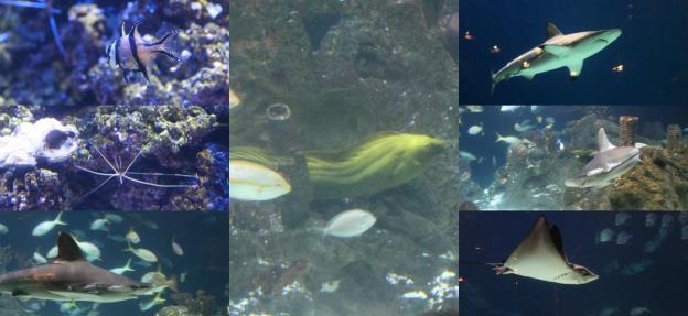 random fish #3.jpg