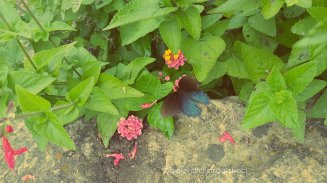 celebrating tanya edited photos (7)