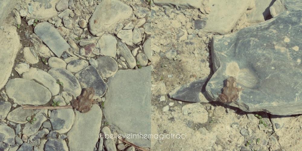St Helena Frog