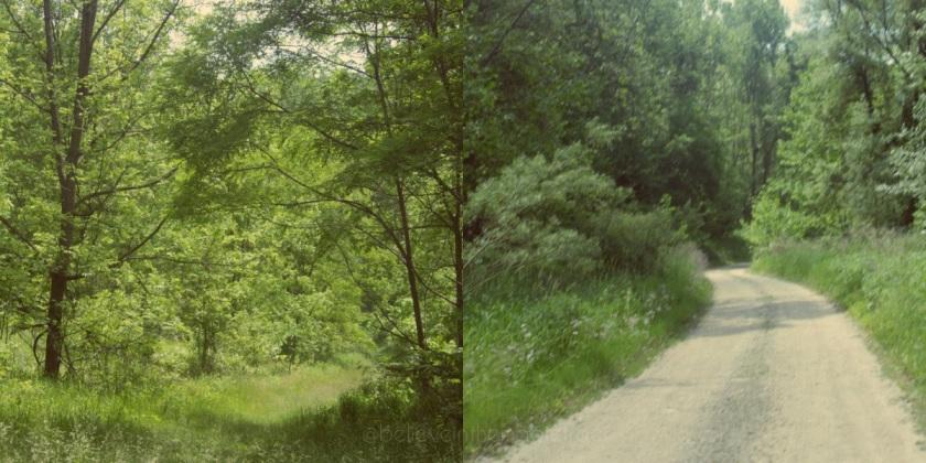 St. Helena Trail 2