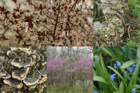 spring 2012 collage 4