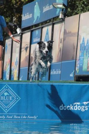 dog jumping 3